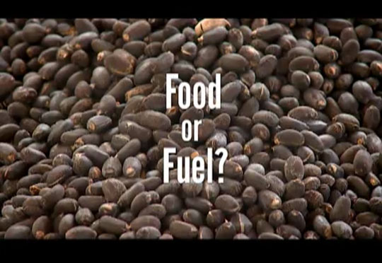 Future Food - Kenya Food or Fuel
